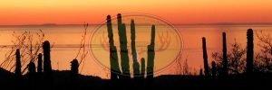 Sonora Mexico Desert Hunts