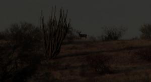 Extreme sonora desert hunt