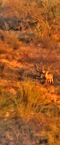 Sonora Desert Sonoran Outfitters