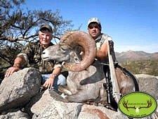 Desert Bighorn Sheep Ram Hunt Sonoran Outfitters