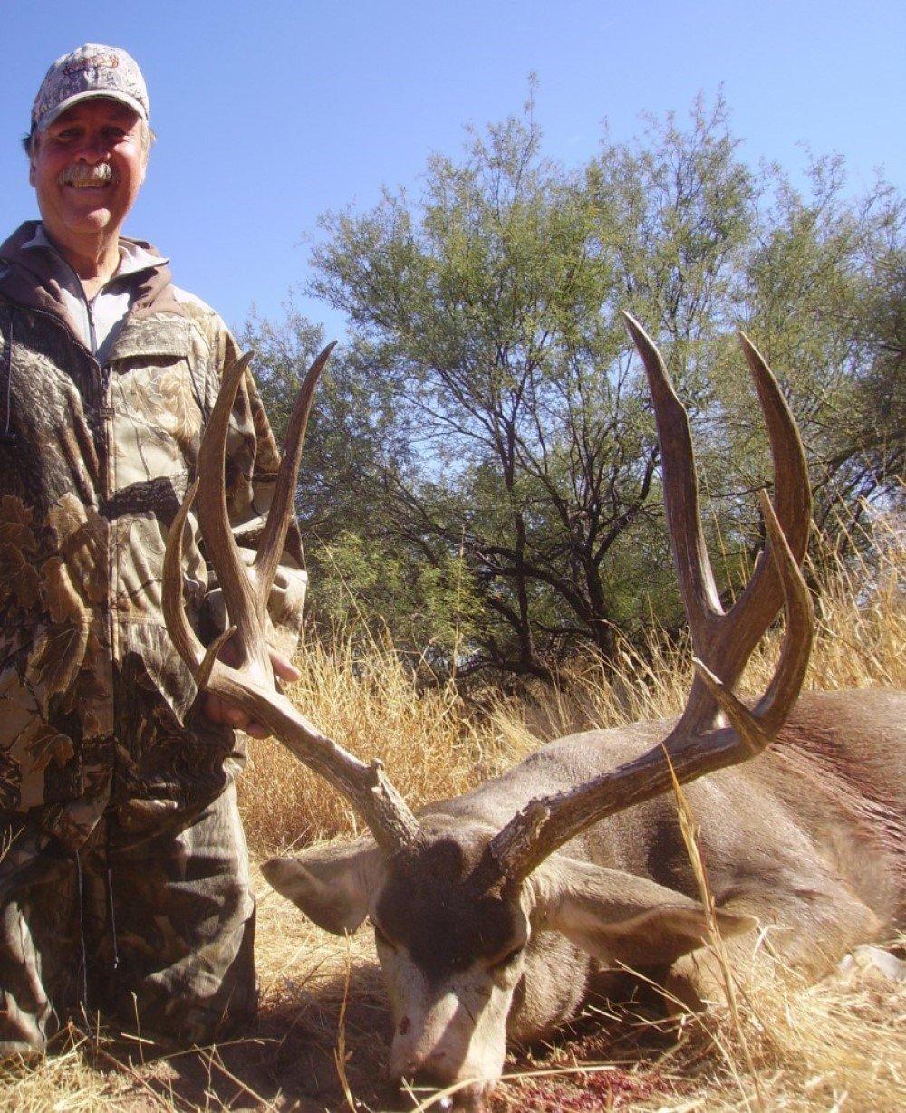 mule deer sonoran desert