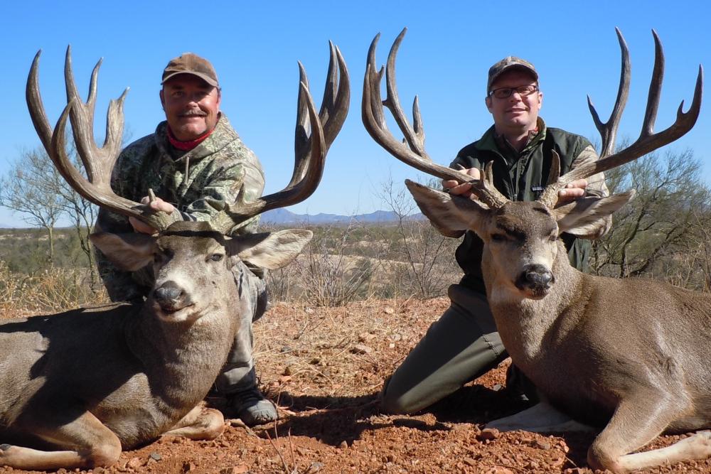 hunting Mexico mule deer