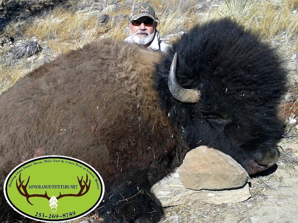 buffal big mexico hunting
