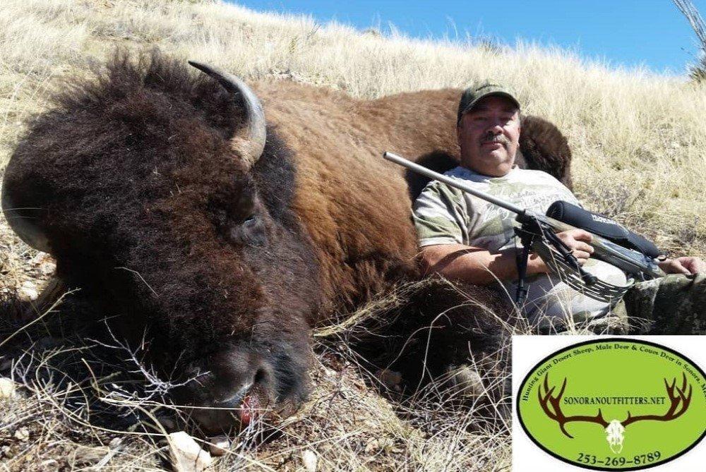 buffalo David mexico hunting
