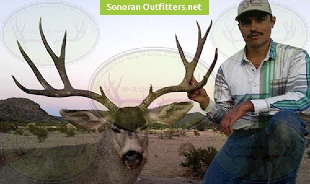 desert-mule deer mexico