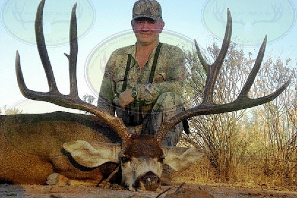 desert-mule-deer6 hunt mexico