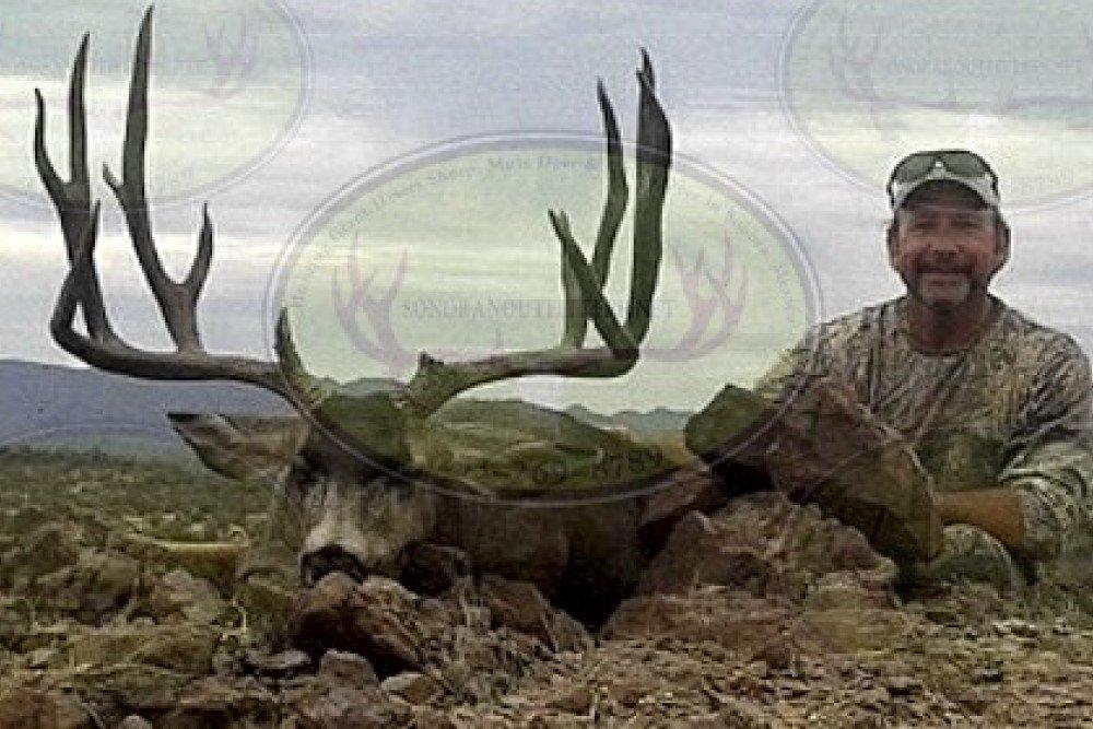 desert-mule-deer9 hunt